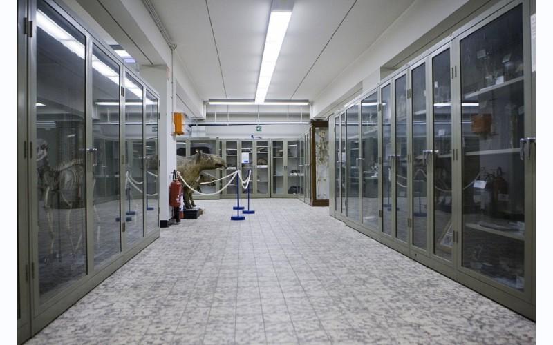 Museum voor Dierkunde