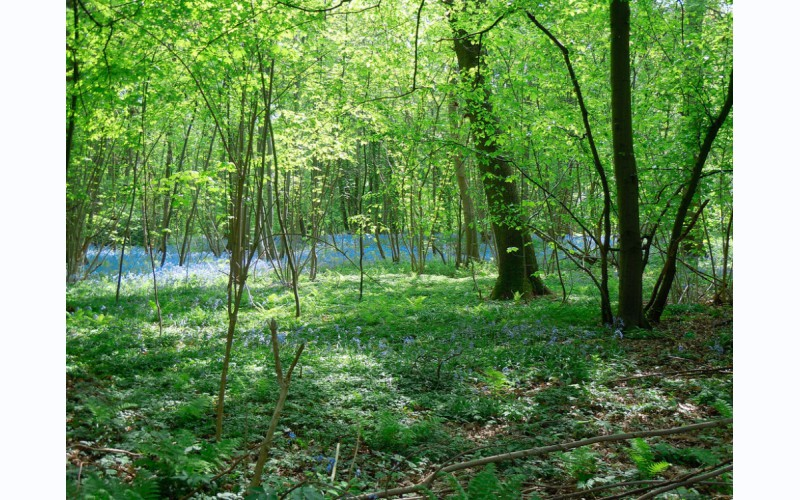 Het Natuurpark - les Hauts-Pays