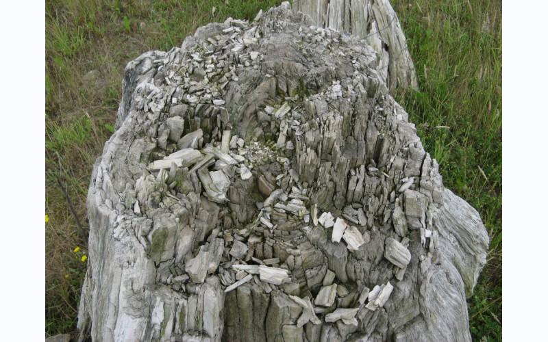 Geosite Goudberg