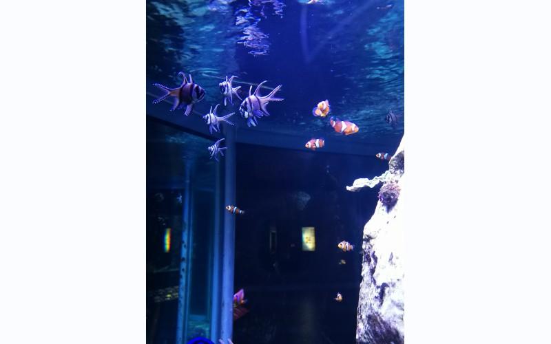 Aquarium - museum van Luik