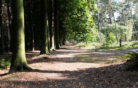 Het Kloosterbos