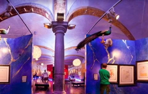 Museum - Gallery XPO Salvador Dali