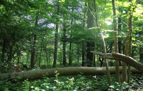 Het Bos t' Ename