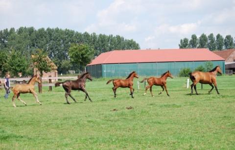Paardenmelkerij 't Kattenheye