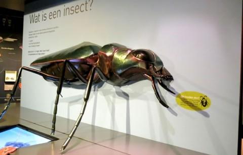 Insectenmuseum Entomopolis