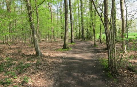 Buggenhout bosgemeente
