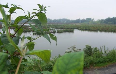 Europees natuurreservaat Molsbroek
