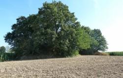 Tumuli van Noirmont