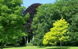 Het arboretum van Monceau-sur-Sambre