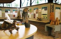 Bosmuseum Hallerbos