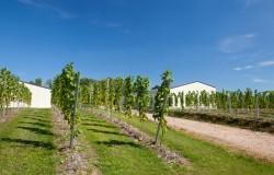 Wijndomein Kluisberg