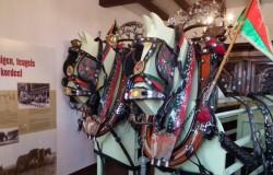 Museum van het Belgisch Trekpaard